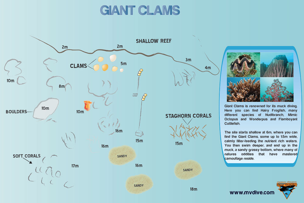 GIANT-CLAMS